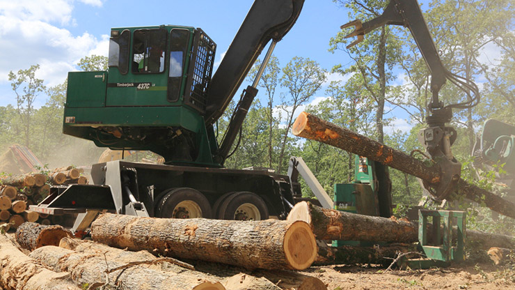Modern, mobile forestry equipment is shown harvesting mature trees.